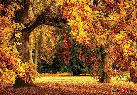 Puzzle Korea 1000pcs Autumn.jpg