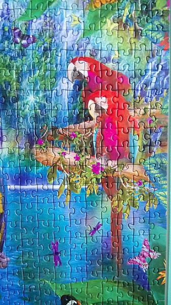 2017.03.25 500pcs Bird Tropical Land (3).jpg