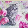 2017.12.26 300pcs Cat & Tulips (1).jpg