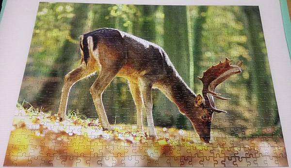 2018.06.26 500pcs King of the Forest (2).jpg