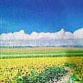 2018.06.29 500pcs Sunflower Field & Blue Sky  (2).jpg