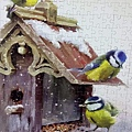 2018.07.16 500pcs Bluetits (2).jpg