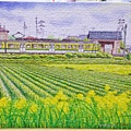 2018.10.16 368pcs Early Summer 初夏-新瀉縣-彌彥線矢作站 (1).jpg