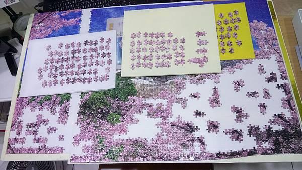2018.11.08 2016pcs Sakura Japan.jpg