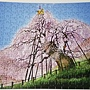 2019.03.11 300pcs Miharu Taki Cherry (Fukushima)三春の滝桜 -福島 (3).jpg