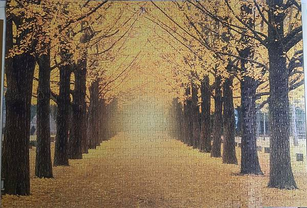2019.05.17-18 1000pcs Yellow Gingko Trees Boulevard (5).jpg