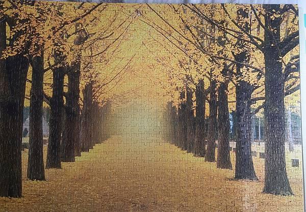 2019.05.17-18 1000pcs Yellow Gingko Trees Boulevard (6).jpg