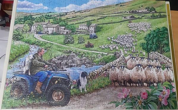 2019.05.20 500pcs Round Up 英國羊 - The Finavon Collection (1).jpg