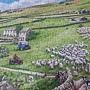 2019.05.20 500pcs Round Up 英國羊 - The Finavon Collection (2).jpg