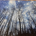 2019.06.18 1000pcs Trees & Forests (4).jpg