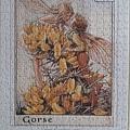 2019.06.22 500pcs Flower Fairies - The Gorse Fairies (3).jpg