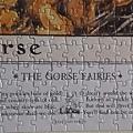 2019.06.22 500pcs Flower Fairies - The Gorse Fairies (5).jpg