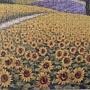 2019.12.14 500pcs Sunflower Field (4).jpg