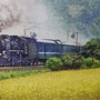 2020.04.23-24 1200pcs A Steam Train Passes Through the Rice Fields 稻香疾馳 (4).jpg