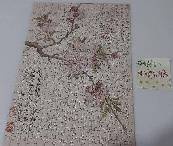 2020.06.02 300pcs Cherry Bloom 櫻花盛開 (1).jpg
