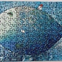 2020.07.01 150pcs Big Fish 大魚 (4).jpg