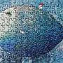 2020.07.01 150pcs Big Fish 大魚 (3).jpg