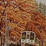 2020.10.24 600pcs Autumn Romance 秋楓色的假期 (3).jpg