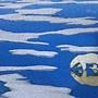 2020.12.31-2021.01.03 500pcs Polar Bear on Ice (3).jpg