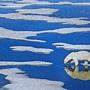 2020.12.31-2021.01.03 500pcs Polar Bear on Ice (1).jpg