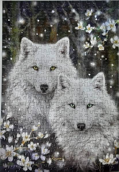 2021.07.12 300pcs Wolves 白狼圖 (2).jpg