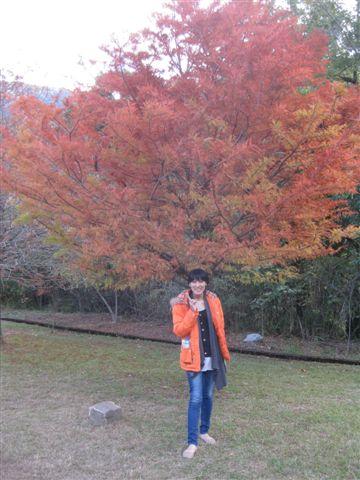 2010.11.19 奧萬大森林遊樂區 (14).JPG