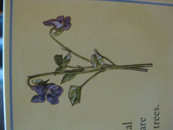 2010.10.08 1000 pcs Flower Fairies 英文字母 (4).jpg