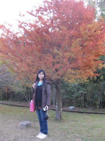 2010.11.19 奧萬大森林遊樂區 (15).JPG
