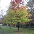 2010.11.19 奧萬大森林遊樂區 (6).JPG