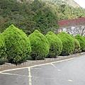 2010.11.19 奧萬大森林遊樂區 (2).JPG