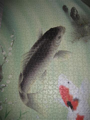 2010.08.03 1000片鯉魚 (10).JPG