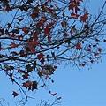 2010.11.19 奧萬大森林遊樂區 (33).JPG
