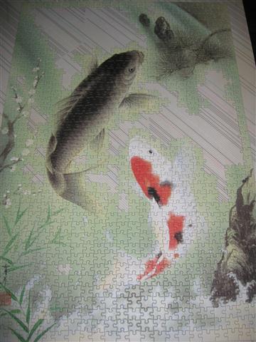 2010.08.03 1000片鯉魚 (1).JPG