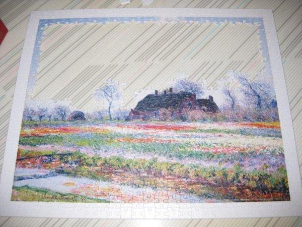 2010.10.12 500 pcs 野外鬱金香 (3).jpg
