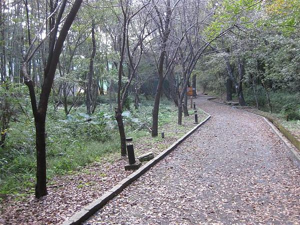 2010.11.19 奧萬大森林遊樂區 (26).JPG