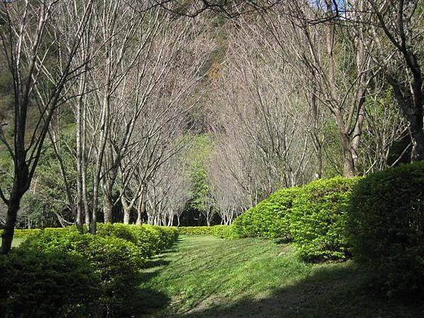 2010.11.19 奧萬大森林遊樂區 (1).JPG