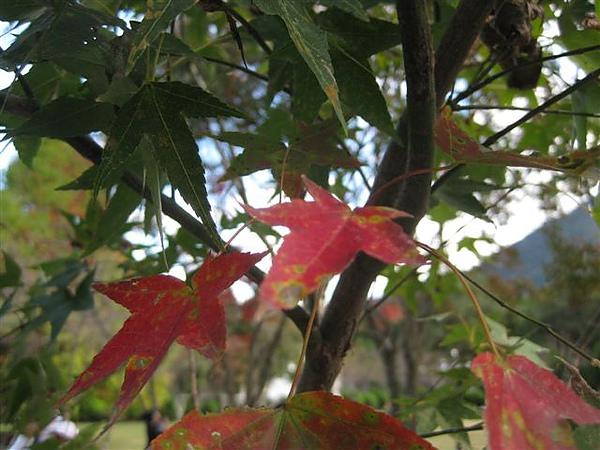 2010.11.19 奧萬大森林遊樂區 (35).JPG