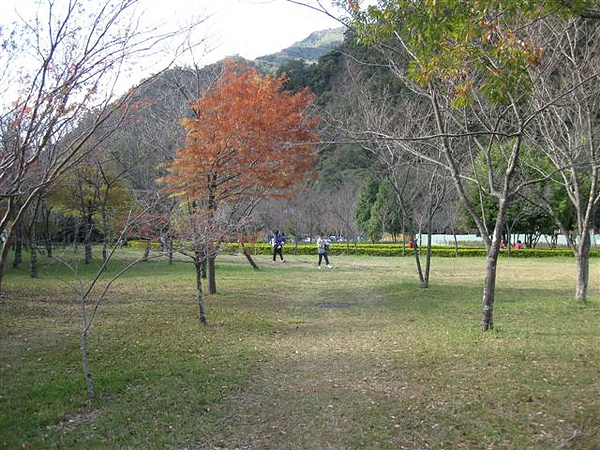2010.11.19 奧萬大森林遊樂區 (11).JPG