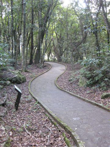 2010.11.19 奧萬大森林遊樂區 (38).JPG