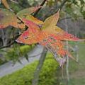 2010.11.19 奧萬大森林遊樂區 (7).JPG
