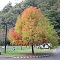 2010.11.19 奧萬大森林遊樂區 (40).JPG
