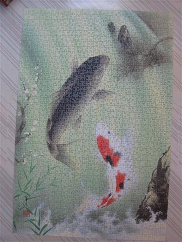2010.08.03 1000片鯉魚 (7).JPG