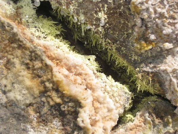 2010.07.03 新北投_地熱谷_壁牆上的硫磺結晶 (8).JPG