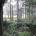 2010.11.19 奧萬大森林遊樂區 (24).JPG