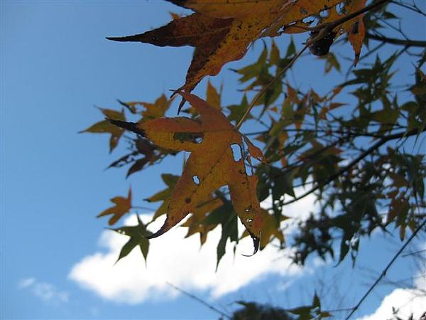 2010.11.19 奧萬大森林遊樂區 (8).JPG