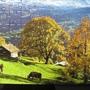 2010.08.29 150片Alpes Berneses, Suiza (9).JPG