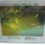 2010.08.31 108片星櫻 (2).JPG