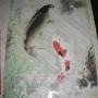 2010.08.02 Epoch 1000片鯉魚 (7).JPG