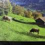 2010.08.29 150片Alpes Berneses, Suiza (8).JPG