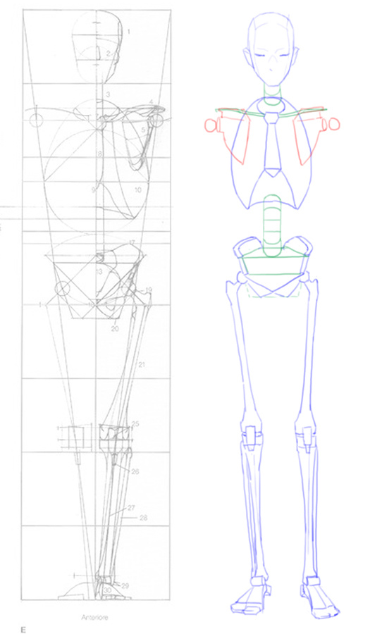 2016-04-23 front anatomy 001